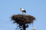 nel nido di cicogna